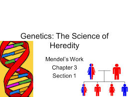 genetics the science of heredity mendel u0027s work chapter 3 section