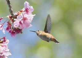 spring tips to attract beautiful birds to your yard new jersey