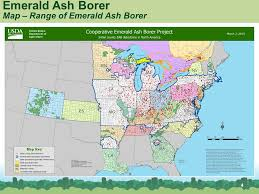 emerald ash borer map emerald ash borer commonly abbreviated eab small beetle