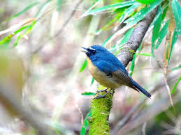 birds images Why some himalayan birds are now climbing higher to nest jpg