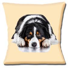 australian shepherd embroidery designs new australian shepherd dog black tan white photo print 16