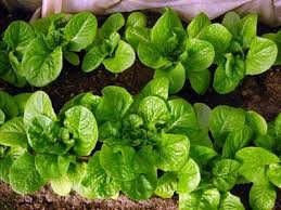 132 best organic garden planning images on pinterest organic