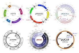 any recommendations for software for drawing plasmid maps