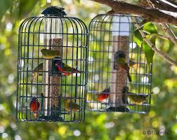 Florida Backyard Birds - bird feeding tips tropical audubon society