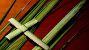 palm fronds for palm sunday hobart churches experience shortage of palm branches the mercury