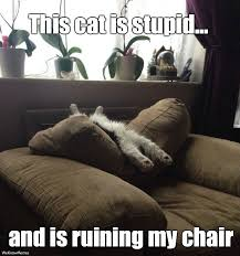 Meme Chair - this cat is stupid and is ruining my chair cat meme cat planet