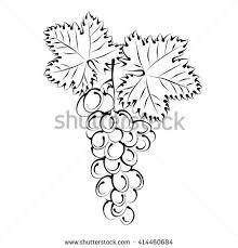 grape vine bunch grapes hand drawn stock vector 414460684