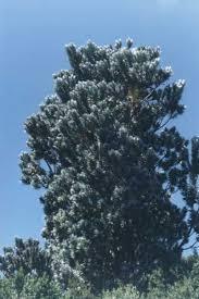 gordo s photos of trees