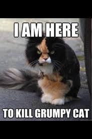 85 best grumpy cat images on pinterest funny stuff grumpy cat