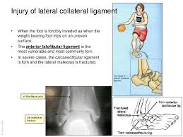 Anterior Distal Tibiofibular Ligament Anatomy Of The Ankle And Joints Of Foot