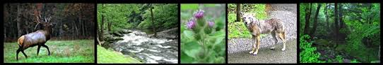 Timberwolf Creek Bed Breakfast Hiking Trails In Great Smoky Mountains National Park Near