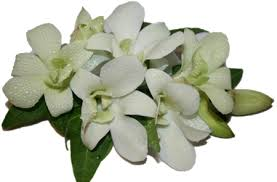 white orchid corsage corsages perth bloomin boxes flower gift boxes and hers