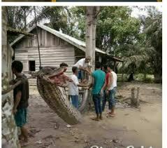 film ular phyton goriau bak di film anaconda robet nababan selamat dari maut