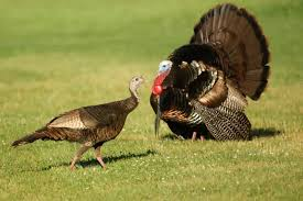 happy thanksgiving new jersey bird photos