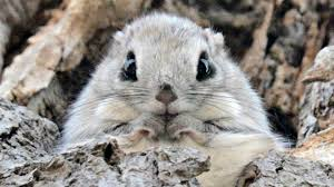 ok we u0027ve found the cutest squirrels in the world