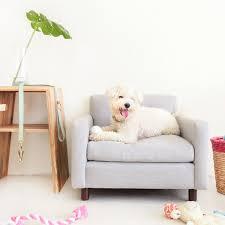 dog lounge chairs from yark dog milk