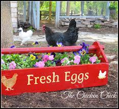 the chicken landscape gardening with chickens