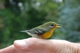great backyard bird count bessemer opinions 2
