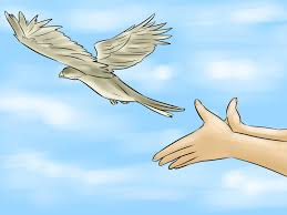 how to calm down a bird 9 steps with pictures wikihow