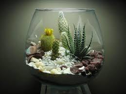 succulent terrarium ideas small garden ideas