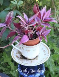 the craf tea cup planters craftygardener ca