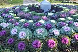reawaken your garden this fall what grows there hugh conlon