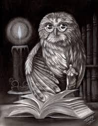 drawings of owls owl and book charcoal drawing by todo