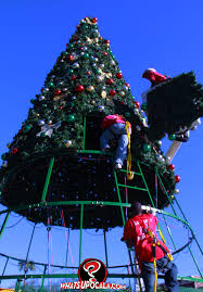 Light Up Ocala Lights Going Up In Ocala What U0027s Up Ocala News Marion County U0027s