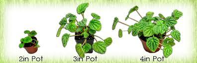 neherp live vivarium u0026 terrarium plants