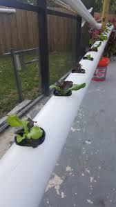backyard hydroponics ifunnybox