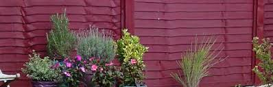 decking and fencing colour