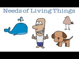 needs of living things a fun video for preschoolers youtube