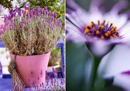 topfpflanzen balkon die schönsten topfpflanzen finden sie jetzt bei westwing