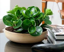 good inside plants 11 of the best plants to have on your coffee table contemporist