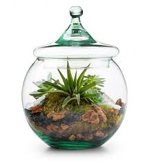 glass globe terrarium kit home decor a large 8