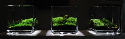 Small Tank Aquascaping Anyone Has Success In Mini Aquascape With Betta Tank Less Than 20cm