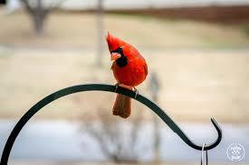 backyard birding get started
