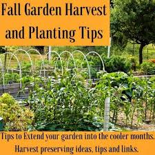 fall garden chores what to do before winter comes