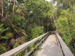 tropical hardwood hammock wikipedia