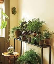 Artificial Plant Decoration Home 32 Best House Plants Images On Pinterest Plants Potted Plants