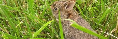 rabbit banner rat catcher in birmingham sutton coldfield hullternative
