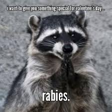Funny Raccoon Meme - best funny raccoon meme pin by taylor jackson on to funny