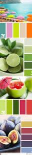 best 25 tropical colors ideas on pinterest tropical design