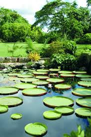 Information About Botanical Garden Fairchild Tropical Botanic Garden If You Are Looking For