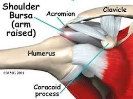 Shoulder Pain In Bench Press Why Am I Having Sharp Shoulder Pain Girls Gone Strong