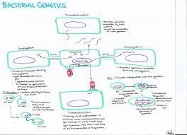 20 april 2013 ashley u0027s biology study guides