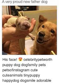 Proud Face Meme - a very proud new father dog his face celebritypetworth puppy