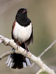 Canopy Birds by Birding Pennsylvania U0027s U201cbig Woods U201d Pennsylvania Ebird