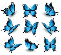 set of beautiful blue butterflies royalty free cliparts vectors