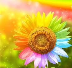 colorful colors flower colors flowers colored trails rainbow sunflower colorful